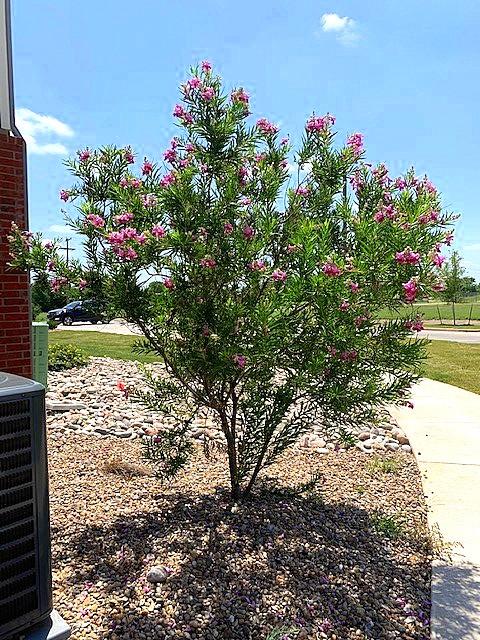 Cascade Villas Wichita Falls TX pretty landscaping
